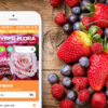 Full Stack Web Development on CMS WebAsyst Shop-Script for Flower Delivery Service with Online Store Cyber-Flora
